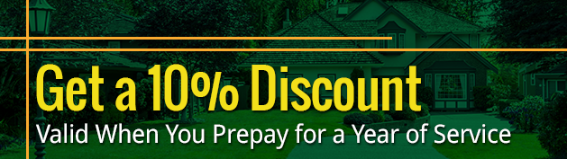 Get a 10% Discount - Valid When You Prepay for a Year of Service